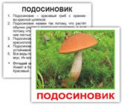 mushrooms_rus_01_2