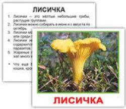 mushrooms_rus_02_2